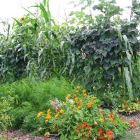 jardin_chemin_cueillant